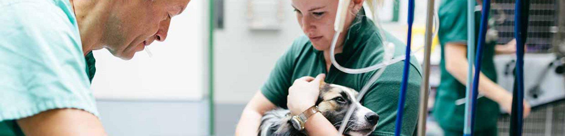 Partnervermittlung tierarzt