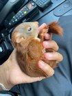 Eichhörnchen Bild1