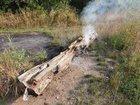 Brennender Baumstumpf