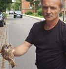 Herr Janzen rettete den Falken