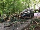 Der Baum stürzte plötzlich auf die Fahrbahn.