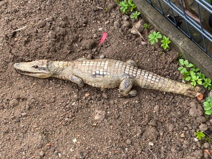 Krokodil.jpeg