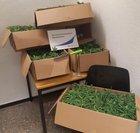 Beschlagnahmte Cannabispflanzen / Foto: Bundespolizei