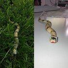 Schlange im Vorgarten