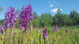 thumbnail - Orchideenwiese Altenberg