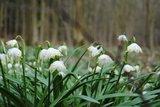 thumbnail - Frühling im Oderwald