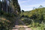 thumbnail - Forstweg entlang des Waldes
