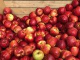 thumbnail - Äpfelkiste mit Äpfeln