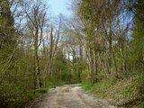 thumbnail - Anfangs verläuft die Strecke noch auf breit ausgebauten Forstwegen.