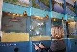 thumbnail - Interaktive Aquarienwand in der Ems-Erlebniswelt