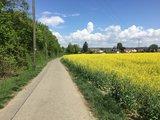 thumbnail - Weg nach Oberuhldingen entlang eines Rapsfeldes