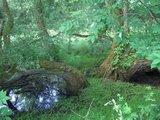thumbnail - Dichten Wald durchkämmen wir bei unserer Wanderung.