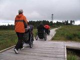 thumbnail - Auf dem Bohlenweg geht es durch das Hochmoor