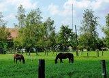 thumbnail - Pferde im Moos