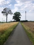 thumbnail - Feldweg