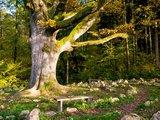thumbnail - Labyrinth auf dem Naturpfad Sinneswandel