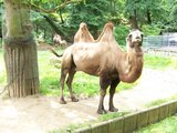 thumbnail - Tierpark Halberstadt