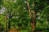 thumbnail - Park in Sagard
