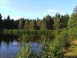 thumbnail - Idyllisch liegt der Ochsensumpfteich im Wald.