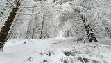 thumbnail - Am Wegesrand - Winterwanderweg Elbingerode