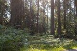 thumbnail - Farn im Unterholz