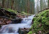 thumbnail - Orbquelle im Wald