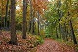 thumbnail - Brekendorfer Forst
