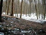 thumbnail - Hügelgrab  im Seulinger Wald