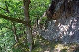 thumbnail - Waldstück der Caaner Schweiz