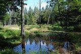 thumbnail - Moorlandschaft in der Dübener Heide