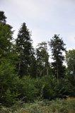 thumbnail - Erholungswald Drübeck