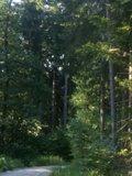 thumbnail - schattiger Waldweg