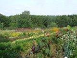 thumbnail - Gartenvielfalt