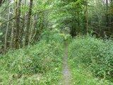 thumbnail - Single Trail bei Sorge
