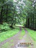 thumbnail - Buchenhochwald am Ziegenberg