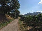 thumbnail - Weg zwischen Weinbergen