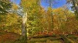 thumbnail - UNESCO-Weltnaturerbe Serrahner Buchenwälder