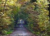 thumbnail - Paintner Forst im Altmühltal