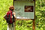 thumbnail - Die Geologie des Lahnmarmors