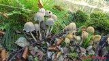 thumbnail - Geführte Pilzwanderung