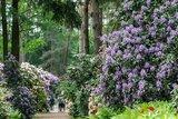 thumbnail - Rhododendronpark Bruns