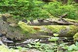 thumbnail - Biotop Holz