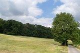 thumbnail - Baum am Wegesrand