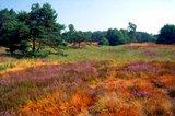 thumbnail - Naturschutzgebiet Boschbeektal