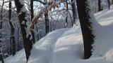 thumbnail - Winter im Kleditschgrund 2010