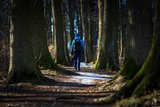 thumbnail - Promenadenweg (Winterwanderroute 28 Götzinger Höhe)