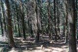 thumbnail - Pfad durch Tannenwald
