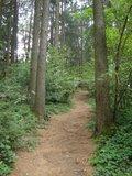thumbnail - wunderschöner Waldweg