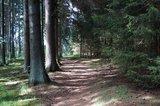 thumbnail - Schöner Waldweg