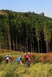 thumbnail - Ein markanter Punkt im Verlaufe der Tour: Die Bruchhauser Steine